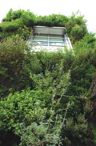 The Drew School in California commissioned Blanc to create a vertical garden for their new assembly wing which was 'green' in every sense of the word including receiving LEED certification. The garden was designed using native Californian plants including Blanc's favourite ferns.