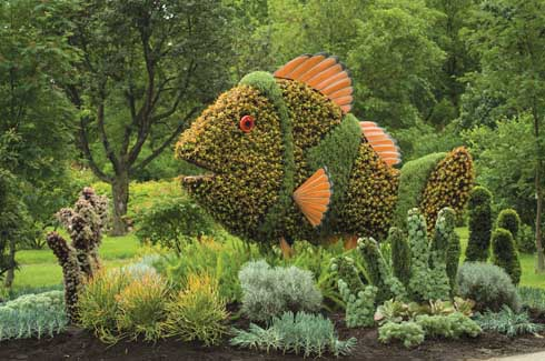 """From Okinawa in Japan comes the sculpture called, """"Small Clownfish and Anemone"""". This one focuses on the concern for protecting such tropical fish. It is composed of  several types of succulents and asparagus fern."""