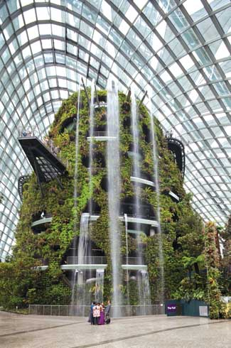 """n the Cloud Forest, the world's tallest indoor waterfall invites you to experience life in the tropical highlands, a """"mysterious world veiled in mist."""""""