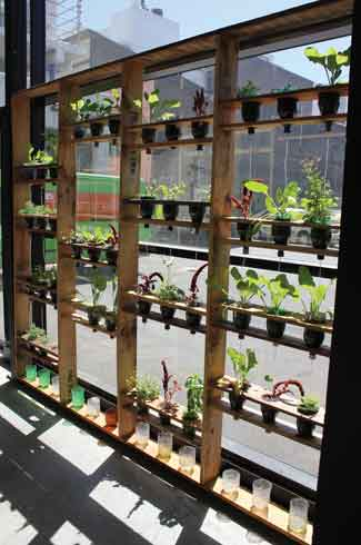 Designtree, Wellington, Tim, Rebecca, indoor and outdoor planter boxes, seedling trolleys, room dividers, a window garden, Joseph Nicholls
