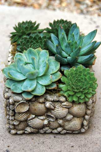 Living Gardens Landscape Design Inc, boutique garden design, South Orange County, Sacha McCrae, Echeveria Elegans, Sempervivum Sunset, Kalanchoe Tomentosa, Pachyveria Glauca, Phormium Yellow Wave, Senecio Rowleyanus, String of Pearls, Echeveria, Alma Wilson, Sempervivum, Ruby Heart