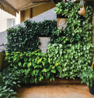 Green Drops India, Bhairavi Shevade, Supriya Nikumbh, vertical gardens, terrace garden, kitchen gardens, living room green wall systems, green partitions, green arts.